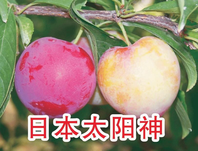 奥林果业 果树品种 返回 李树