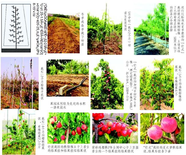 果树艺术平面图